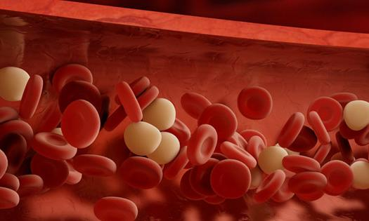 Red Blood Cells, magnified